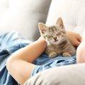 猫を初めて迎える初心者が知っておきたい飼い方やコツ、飼いやすい猫…