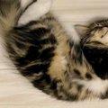 天使か!かわいいが過ぎる猫さんの寝姿がTwitterで話題♡