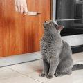 猫の食器洗剤おすすめ商品と使い方、人間用を使わない方が良い理由まで