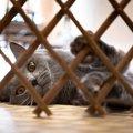 猫の『侵入防止策』3選!危険な事故や怪我を防ぐ方法とは?