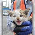 ボンネットから子猫を救助!居合わせた人達による命のリレーに感動