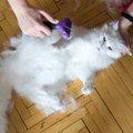猫の抜け毛の時期と知っておきたい2つの対策