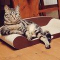 ヒルズ族?優雅な佇まいの猫が成功したセレブに見えると話題