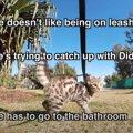 生後12週の天才猫さん、全力疾走で向かうのは…巨大な猫トイレ!?
