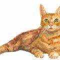 オリエンタルロングヘアの特徴や性格、飼い方と注意点について