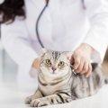 保護猫を飼っている、飼う予定の方へ!『ウイルス感染症』知っていま…