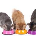 猫の食器を選ぶポイントとおすすめ商品