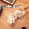 飢えてビニールを食べていた…保護されたガリガリ猫がむちむち幸せに!