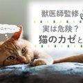 【実は危険?!】猫のカゼとは(獣医師監修)