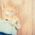 猫が靴下を隠すのはどうして?3つの理由と対処法をご紹介します