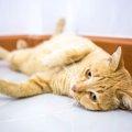 猫が甘える時にするの5つの仕草
