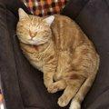 素敵♡京都の猫カフェ「石焼cafe&cat 蔵之助のしっぽ」!