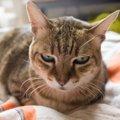 猫が嫌がっている『飼い主の行為』5選!こんな人は猫から嫌われてい…