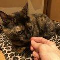 猫が飼い主のニオイを嗅ぐ心理3つ