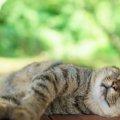 猫にエアコンを使う時の適した設定温度や使い始めの時期