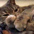 『拒否するにゃ!』お薬を嫌がる猫ちゃんが激カワ♡