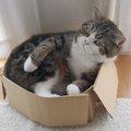 タレント猫「まる」の人気の秘密と経歴