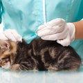 猫のワクチンの値段と種類、注意点について