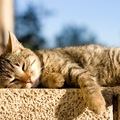 猫が日向ぼっこをする理由とは?