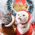 メリークリスマス♪猫ちゃんたちがコスプレをする理由