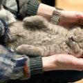 猫に便秘マッサージは効果ある?やり方と解消方法