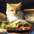猫が食べてはいけないものとは?与えちゃダメな10の危険食品