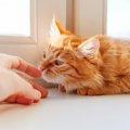 猫に人差し指を向けるとクンクン嗅いでくるのはどうして?3つの理由