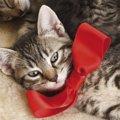 猫にリボンがついた首輪をつける時の選び方やおすすめ商品