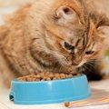猫は餌を丸飲みしても大丈夫?注意したい事とは