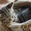 猫がモチーフのお財布おすすめ7選!選ぶ時のポイントも