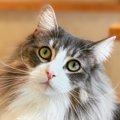 LAYLAの12猫占い【3/30~4/5】のあなたと猫ちゃんの運勢