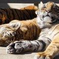 【新型コロナ】猫から人への感染事例はゼロ|海外ニュース