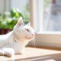 『猫飼育不可』の物件はなぜ多いの?猫と暮らせる部件探しの方法