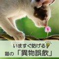 【異物誤飲はいつおこる?】いますぐ防げる猫の「異物誤飲」(獣医師…