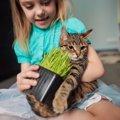 猫に「無理強い」をした結果起きること5つ