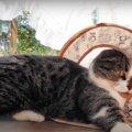 久しぶりのテントが楽しい!変わった遊び方をする猫ちゃん♪