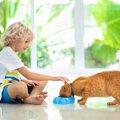 子猫が水を飲まない!上手な飲ませ方やおすすめの水飲み器など