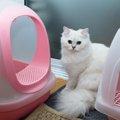 猫のトイレ掃除の方法(クエン酸、重曹、オキシクリーン)洗う頻度