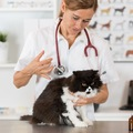猫の予防接種は受ける必要ある?その必要性と受け方にフォーカス!!