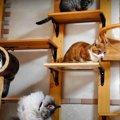 いつの間にかキャットウォークに集合してしまった猫さんたち!