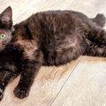 片目の子猫ミクモちゃん…保護され希望の未来へ進む!