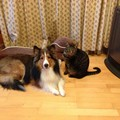猫と犬の多頭飼い!お互いフードを共有しても大丈夫?