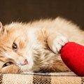 猫が突然死する原因とその予防法
