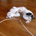 コードを噛む愛猫の問題行動を解決した1つの方法