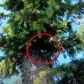 飼い猫が木の上で立ち往生…ハラハラドキドキの救助活動の行く末は?