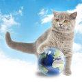 日本や海外で有名な猫達23選