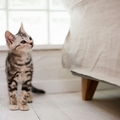 猫付きマンションってどんなシステム?