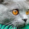 猫がゴロゴロいう仕組みは?3つの憶測