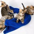 猫に手ぬぐいを使う活用術とかわいい商品5選