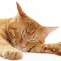 猫の呼吸が早い時に注意すべき4つのポイント